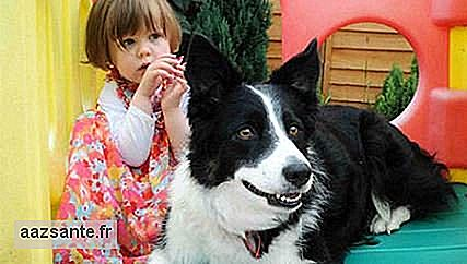 Dog helps to identify cancer in 3-year-old girl
