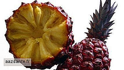 Brazilian has developed a new pineapple: the puã