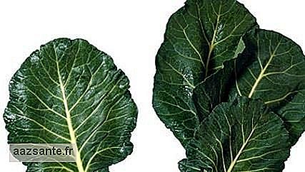 Cabbage can leave your brain 11 years younger