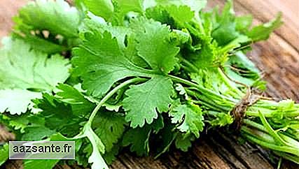 Coriander: see its benefits and how to consume