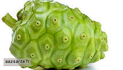 Noni: know this controversial fruit that is forbidden in Brazil