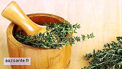 Thyme relieves coughs and is allied to the brain