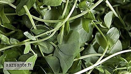 Watercress: Know the benefits and care when consuming
