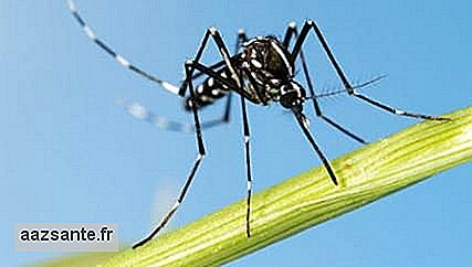 Yellow fever virus is found in another species of Aedes